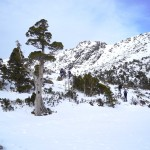 Winter Snowshoe Trek